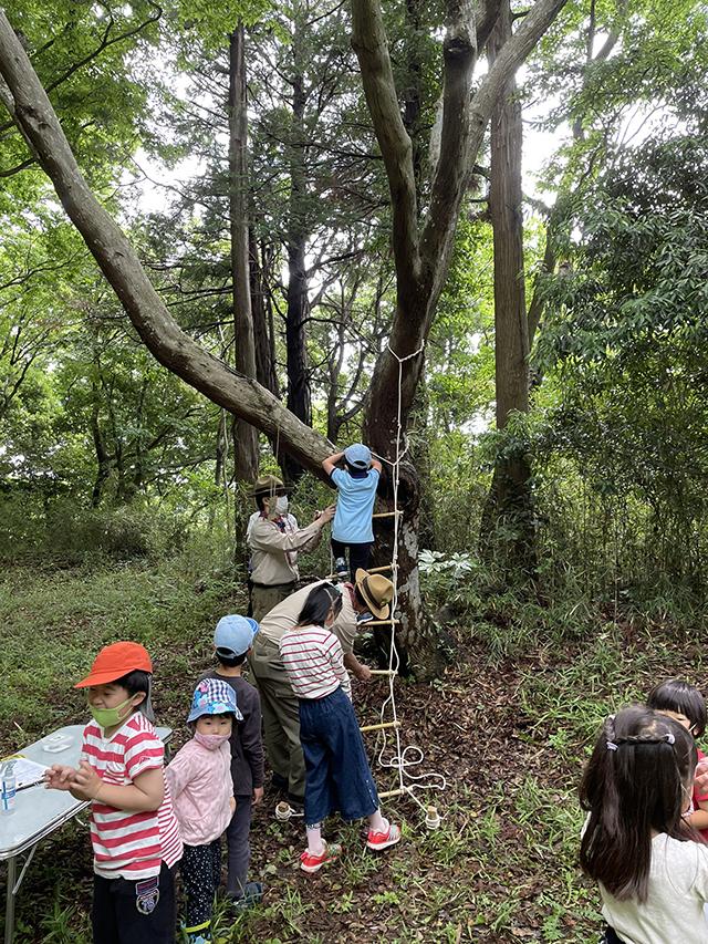 木登り風景
